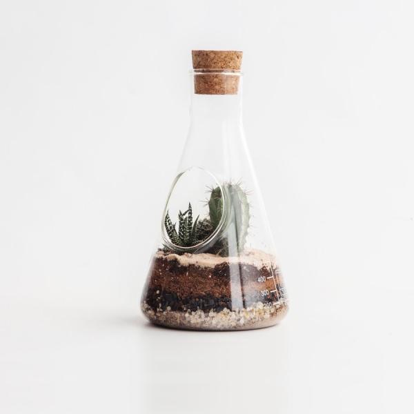 Террариум chemistry